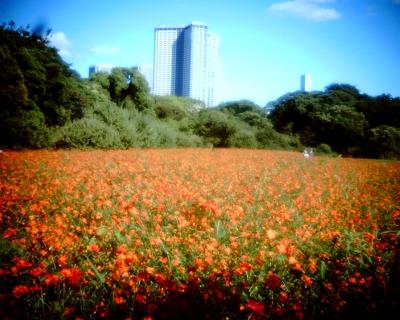 オレンジの絨毯・浜離宮恩賜庭園:Entry