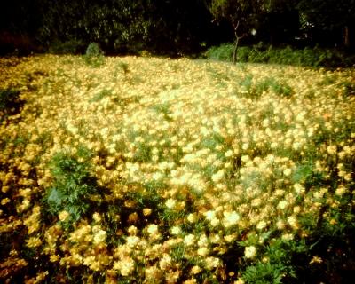 黄色の絨毯・浜離宮恩賜庭園:Entry
