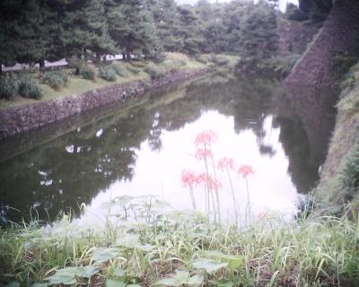 お濠と彼岸花・皇居東御苑:R2