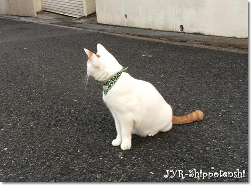 daichi160514.JPG