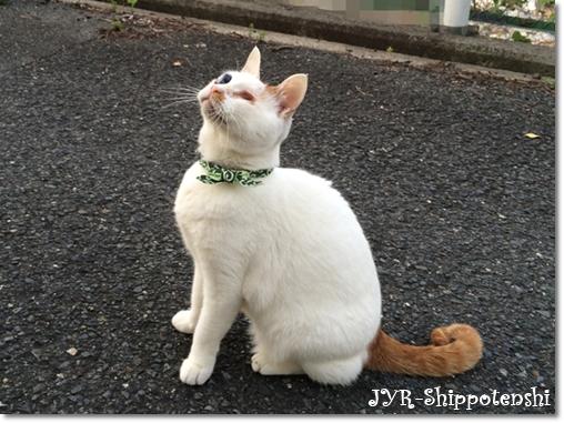 daichi160514_4.JPG