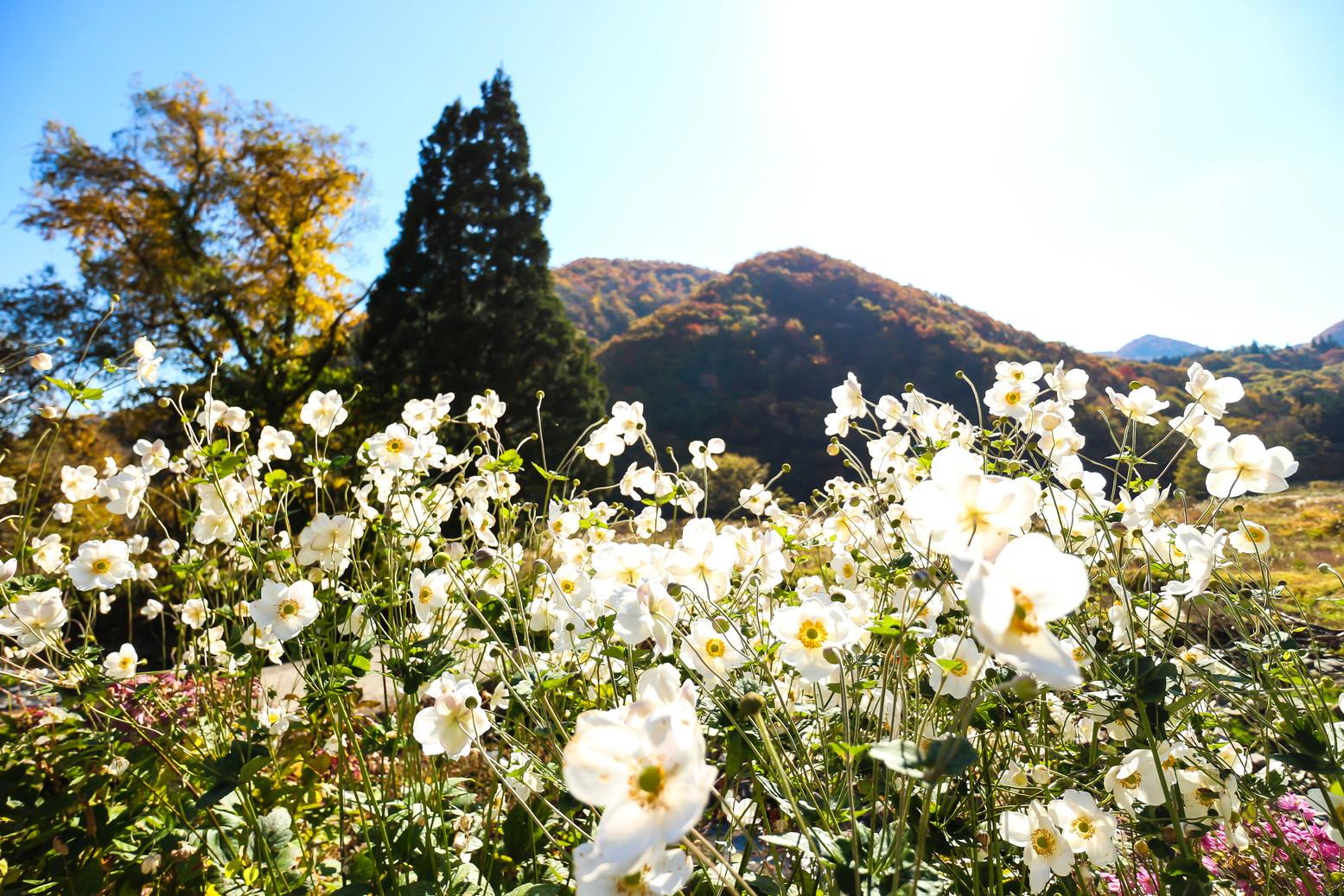 田子町地域おこし協力隊つっちーのブログ20160526_001
