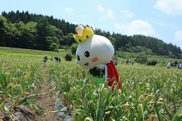 にんにく収穫祭のたっこ王子001