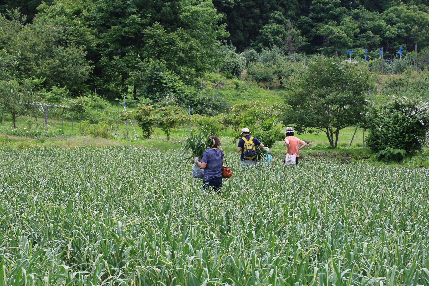 田子町地域おこし協力隊つっちーブログ20160621_007