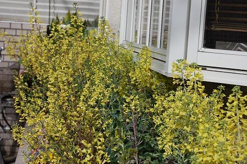 花壇 葉牡丹