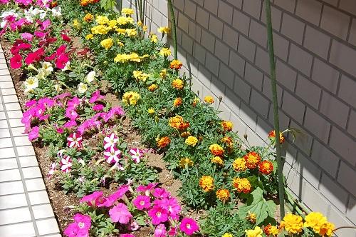 花壇 植え替え08