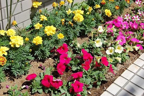 花壇 植え替え10