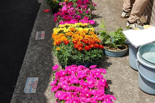 花壇植え替え01