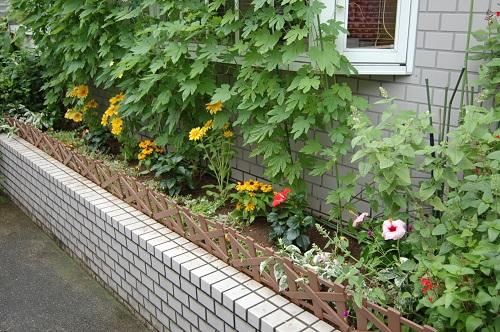 花壇の植え替え 夏01