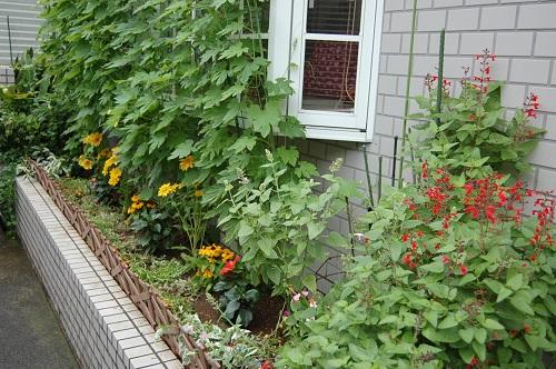 花壇の植え替え 夏02