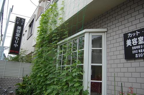 花壇の植え替え 夏03