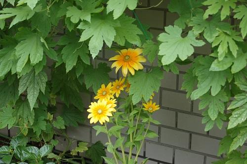 花壇の植え替え 夏04