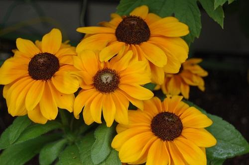 花壇の植え替え 夏05