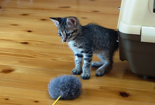 DSC04816 - 子猫