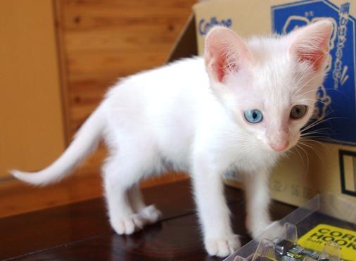 DSC04828 - 白猫
