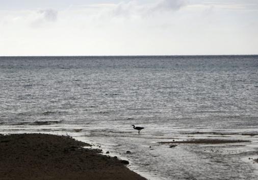 DSC01343 鳥