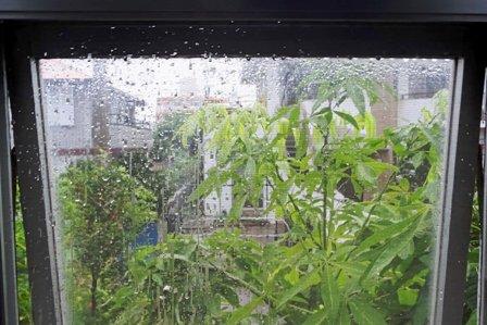 大雨 DSC07724