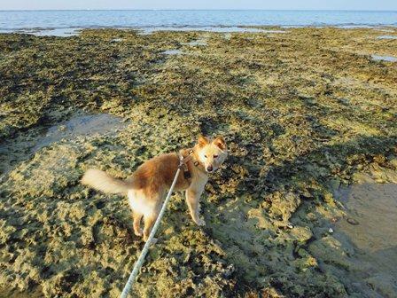 岩浜平 DSC01499