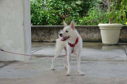 DSC07782 - 犬