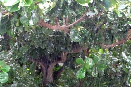 大雨 DSC08512