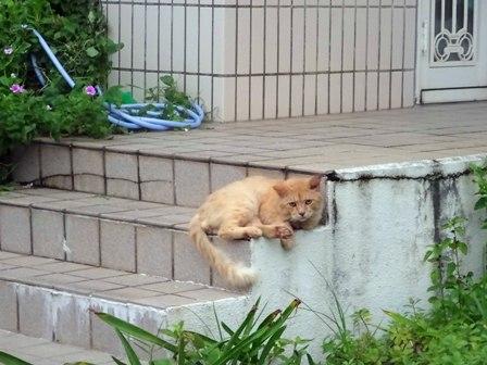 ご近所猫さん DSC02082