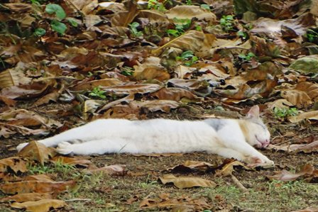 のび~る猫a DSC09001