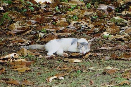 眠り猫d DSC09004