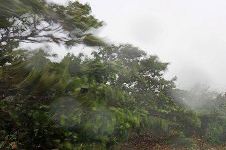 台風17号木々 DSC04483
