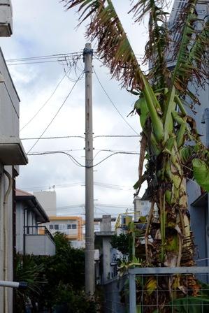 台風17号後eバナナb DSC09156