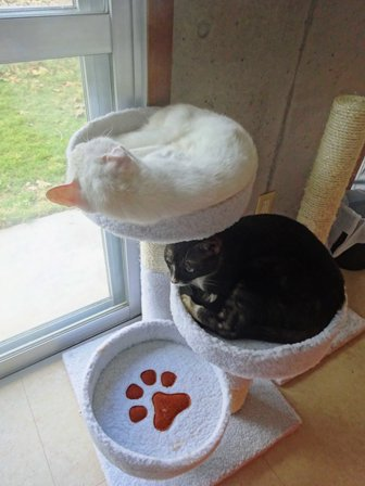 猫タワーa DSC02272