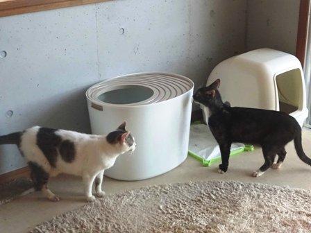 猫新トイレ DSC02228