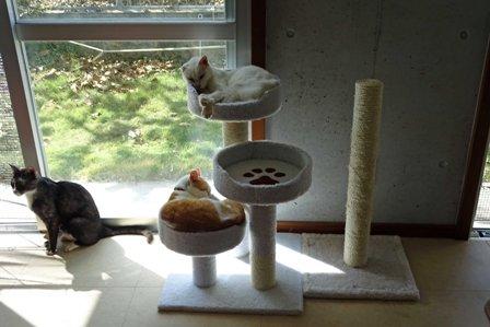 猫新タワーb DSC09151-a