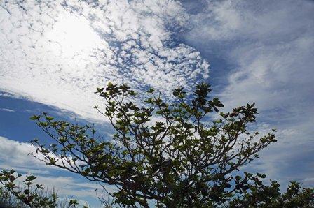 公園の木と空 DSC04561