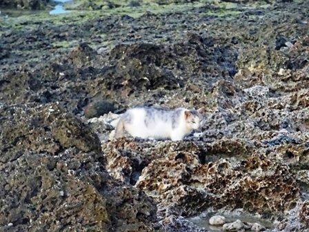 浜の猫b DSC02373