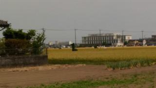 karikomi (1)