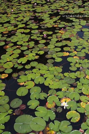 神戸市立森林植物園 長谷池
