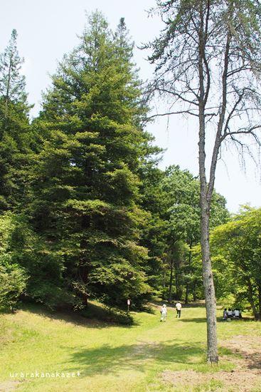 神戸市立森林植物園 北アメリカ区