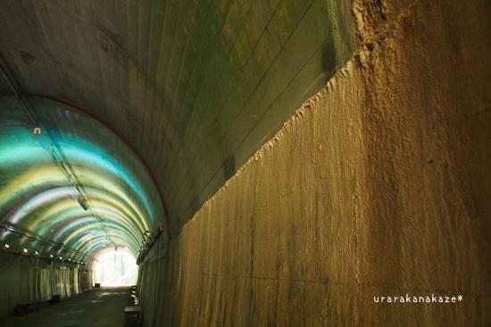 神戸市立森林植物園 青葉トンネル