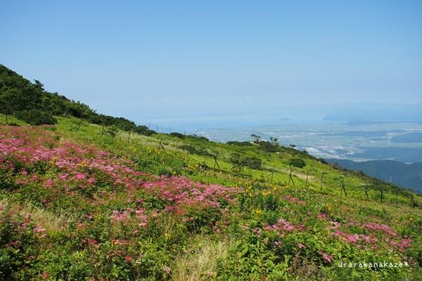 伊吹山のお花畑と琵琶湖