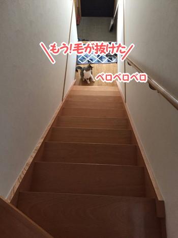 S_5055775735100.jpg