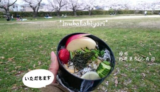 2016sakura7n_s.jpg