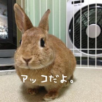 moblog_62bec34f.jpg