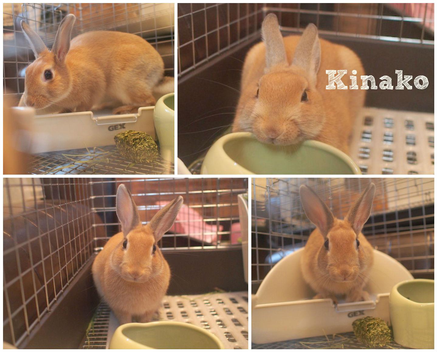 kinakoFotorCreated.jpg