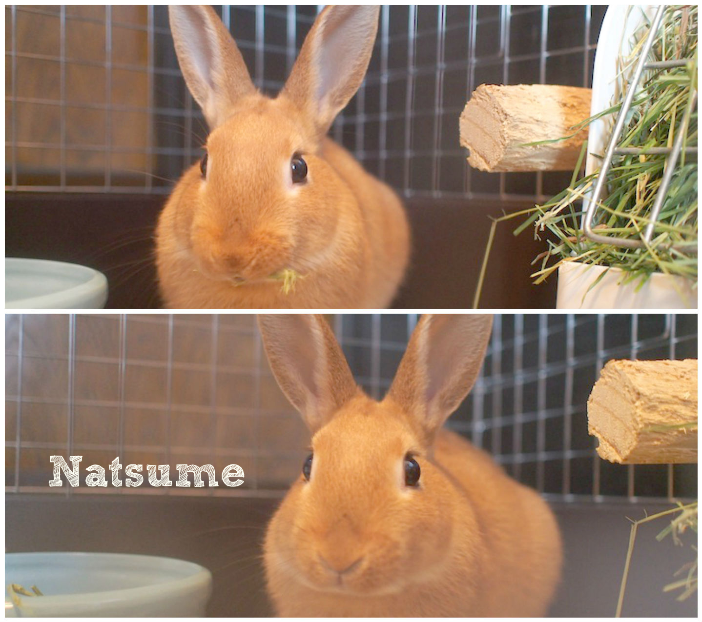 natsumeFotorCreated.jpg