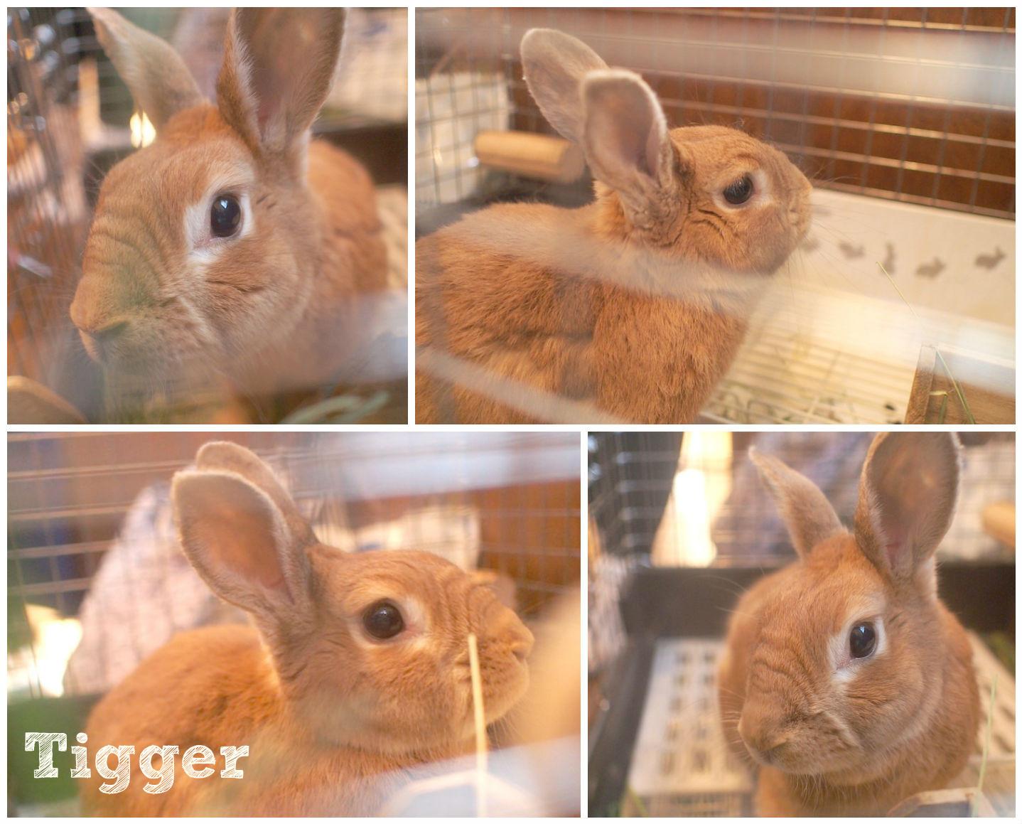 tiggerFotorCreated.jpg