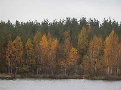 対岸の紅葉