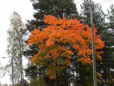 豪華な紅葉