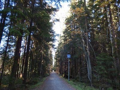 森の抜け道