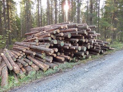 材木切り出し