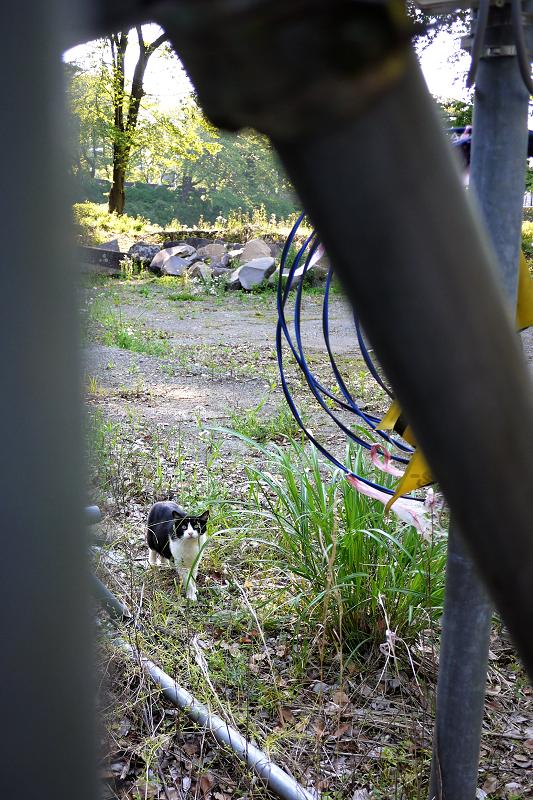 お城の遺跡発掘現場の黒白猫2